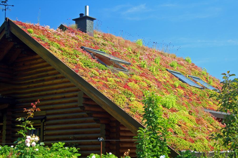 Construire toiture végétalisée