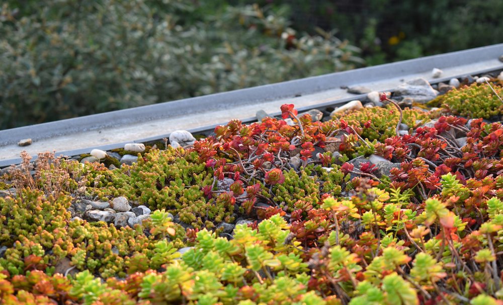 irrigation-toit-végétalisé