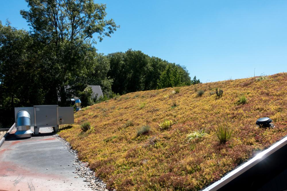 conseils concevoir toiture végétalisée